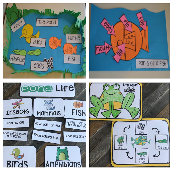 Pond Life {20+} Writing, Literacy and Science Activities
