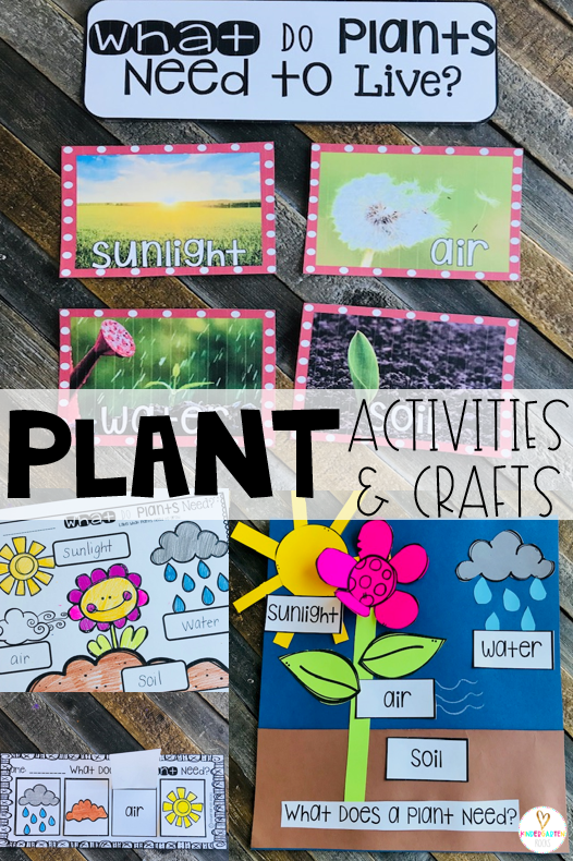 Spring is right around the corner!  Soon our environment will bloom.  Plants is one of our first units in spring.  We love using a variety of plant activities and crafts to make this a memorable unit!  This unit has enough materials and keeps student interest for about two weeks. Plant needs is one of the first lessons we work on. #plants #kindergarten
