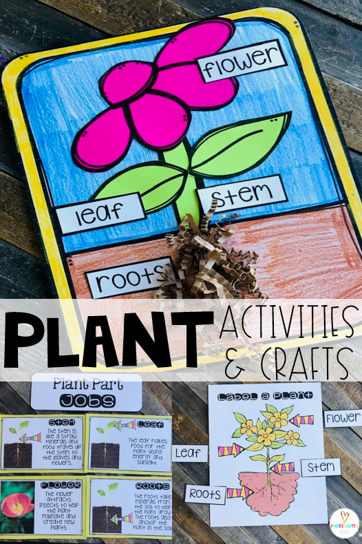 Spring is right around the corner!  Soon our environment will bloom.  Plants is one of our first units in spring.  We love using a variety of plant activities and crafts to make this a memorable unit!  We spend several days working on plant parts.. #plants #kindergarten