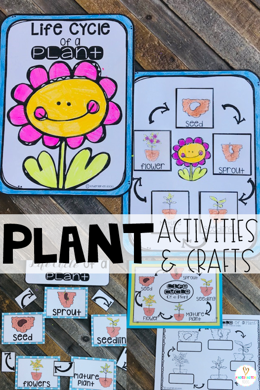 Spring is right around the corner!  Soon our environment will bloom.  Plants is one of our first units in spring.  We love using a variety of plant activities and crafts to make this a memorable unit!  This unit has enough materials and keeps student interest for about two weeks. We spend several days learning about the life cycle of plants#plants #kindergarten