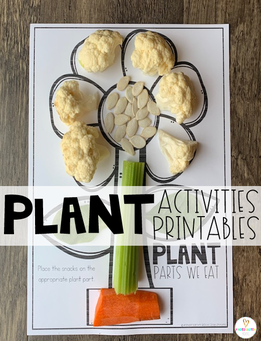 Plant activities are the perfect segway to spring!  If you are looking for print and go science-based printables for your plant unit then you will love Plant Worksheets are perfect for you! We eat plant parts! This fun printable is a fun way to show them the specific plants they eat. #plants #kindergarten #worksheets