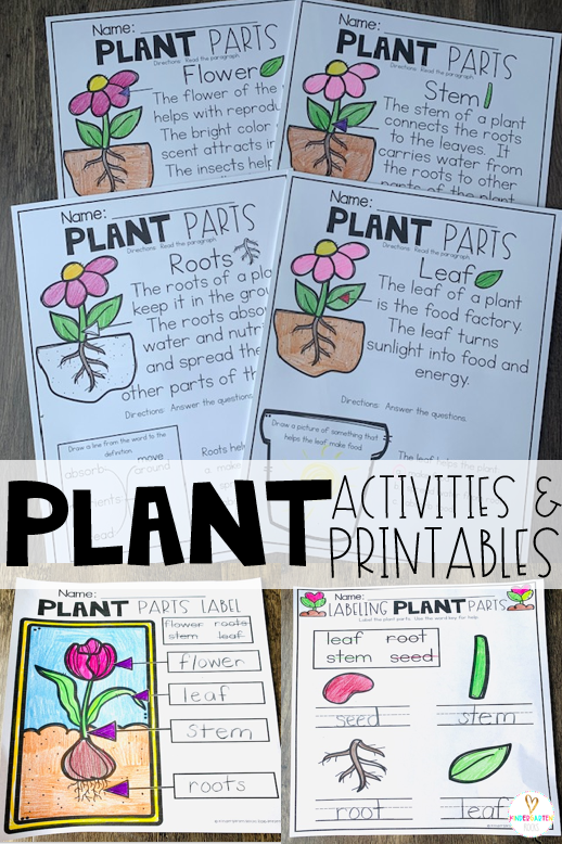 Plant activities are the perfect segway to spring!  If you are looking for print and go science-based printables for your plant unit then you will love Plant Worksheets are perfect for you! There are plant parts comprehension pages and printables. #plants #worksheets