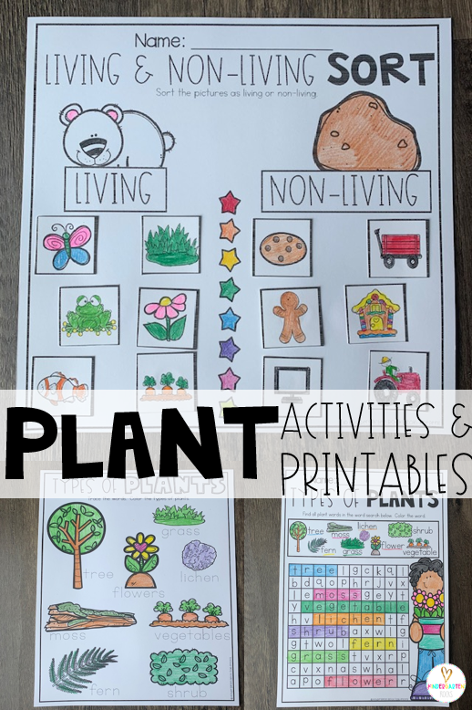 Plant activities are the perfect segway to spring!  If you are looking for print and go science-based printables for your plant unit, then Plant Worksheets are perfect for you! Types of plants and living and non-living things are just a few of the printables included. #plants #kindergarten #worksheets