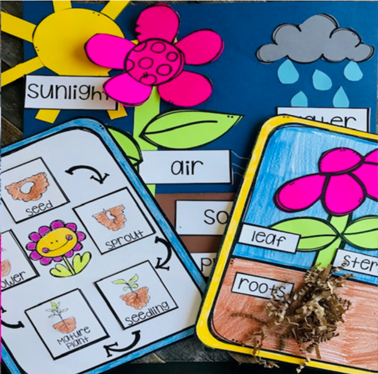 Plant Activities for Kindergarten